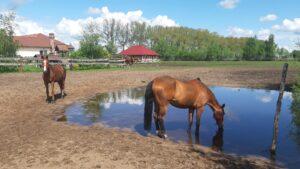 Koń to najlepszy terapeuta- hipoterapia